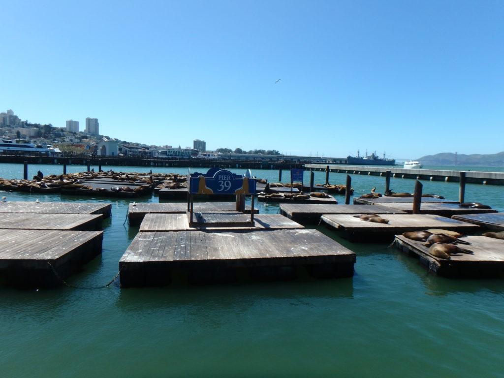 Les lions de mer savourant leur dimanche après midi au soleil sur le quai pier 39 à san francisco