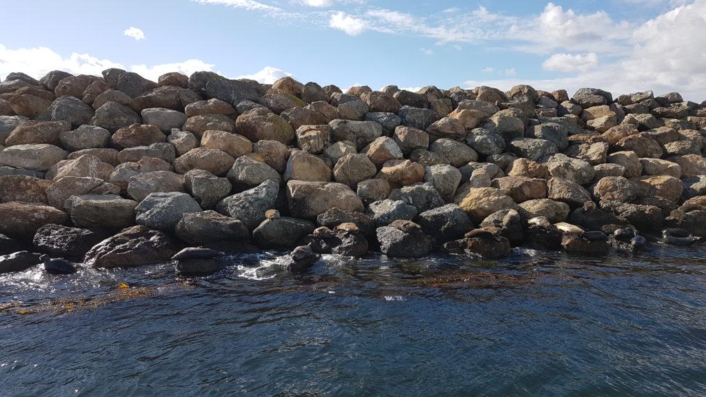 lions de mer dans le port de long beach