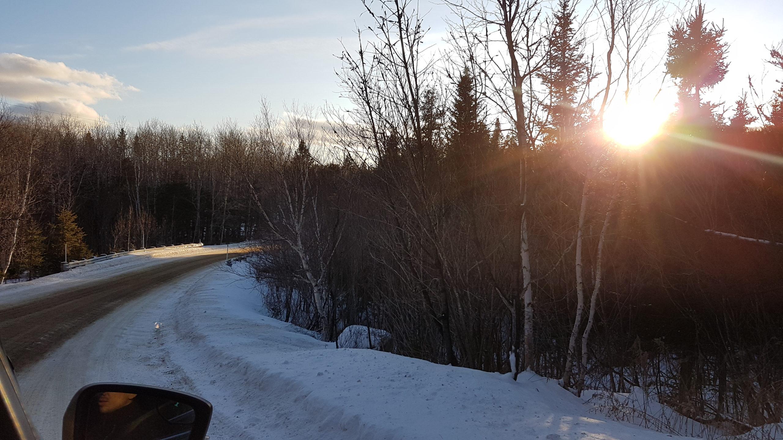 coucher de soleil dans les arbres