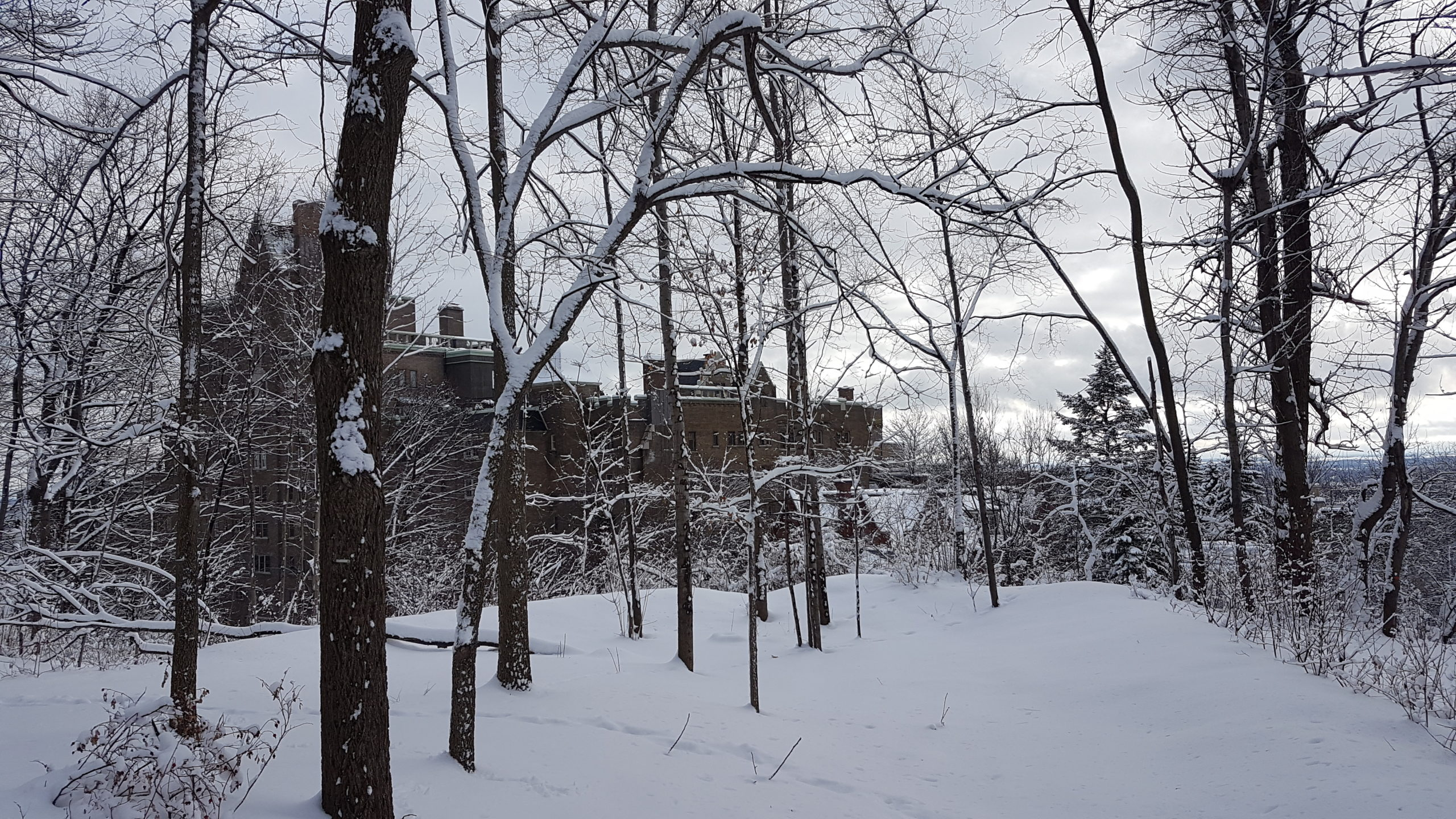 La neige tombée les derniers jours rend ce parc vraiment féérique 😉.