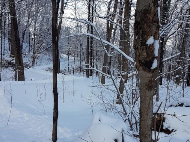 Descente à travers les arbres depuis le belvédère du Mont Royal.