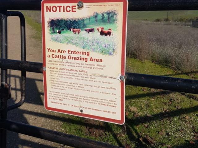 Vaches dans le parc tassajara trail