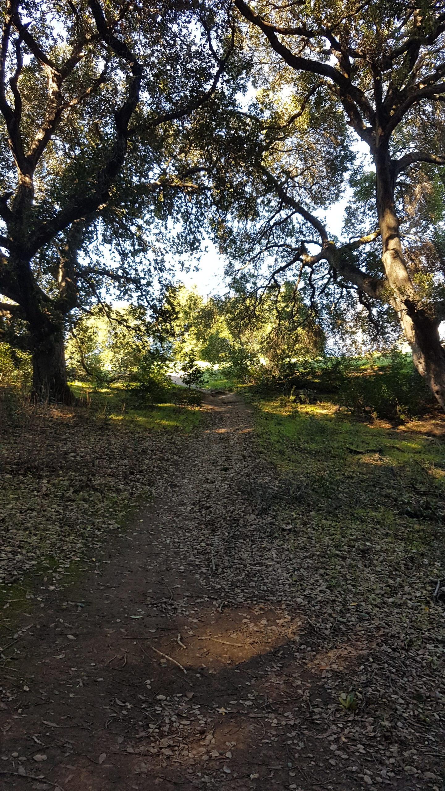 forêt pleasanton californie