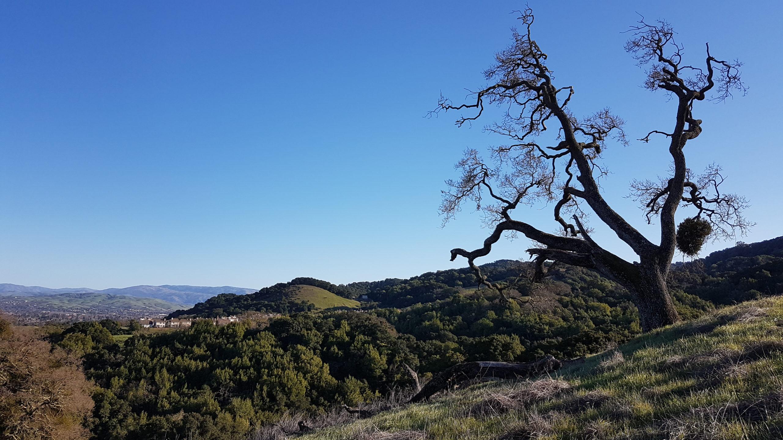 """J'aime bien ces arbres """"biscornus"""" 😄. On dirait que celui là surveille la vallée depuis son """"spot""""."""