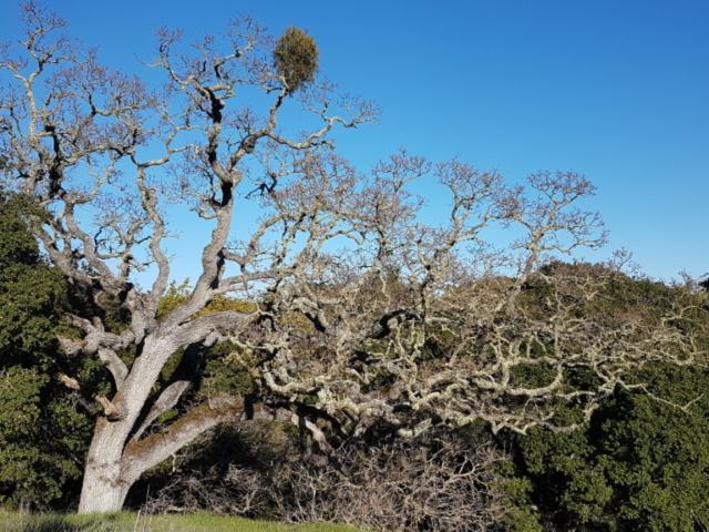 """Encore un arbre """"biscornu"""" 😍😅."""