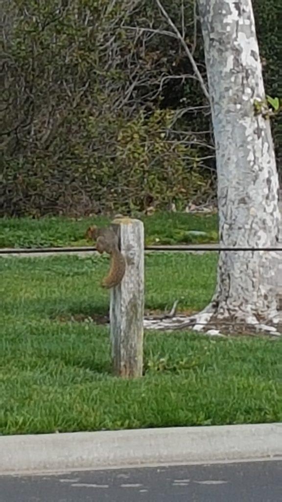 écureuil  qui respecte le confinement