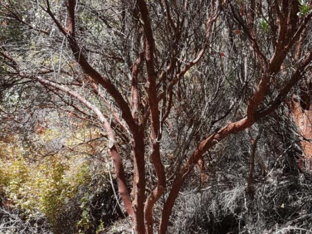 """Encore un arbre """"rouge"""" 😄."""