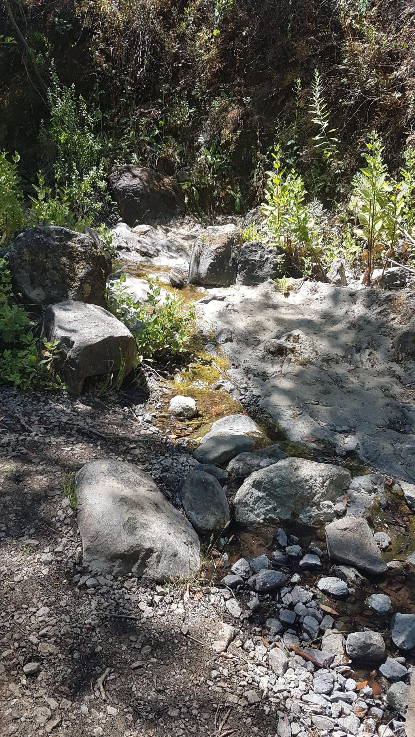 Un ruisseau avec un chouilla d'eau !!! (un tantinet stagnante)