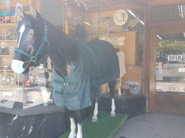 Le cheval aussi a son masque 😅