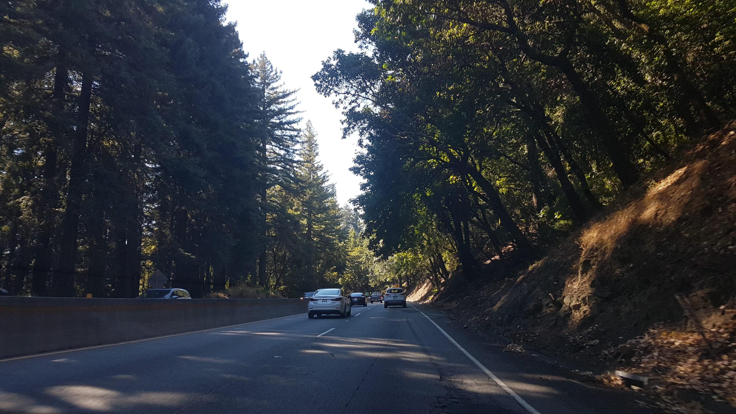 Cette partie du trajet dans les arbres est très agréable 😍