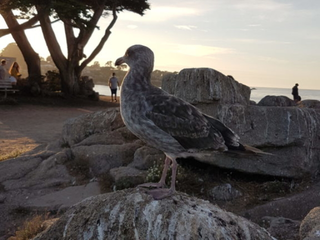 pacific grove 26 lovers point